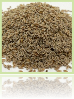 psyllium-colonhelp-seeds